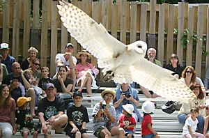 Stone Zoo's Barn Owl, Photo Credit: John Harrison